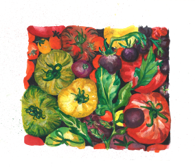 tomatoe-leaves
